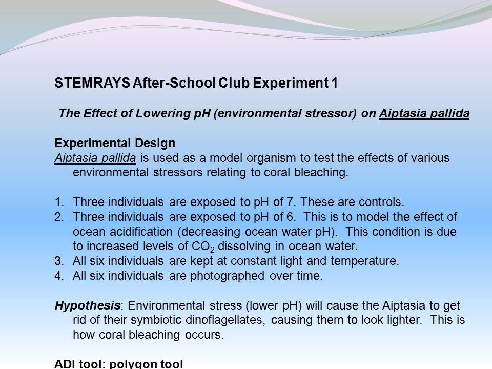 STEMRAYS After-School Club Experiment 1 The Effect of Lowering pH (environmental stressor) on Aiptasia pallida Experimental Design Aiptasia pallida is used as a model organism to test the effects of various environmental stressors relating to coral bleaching.