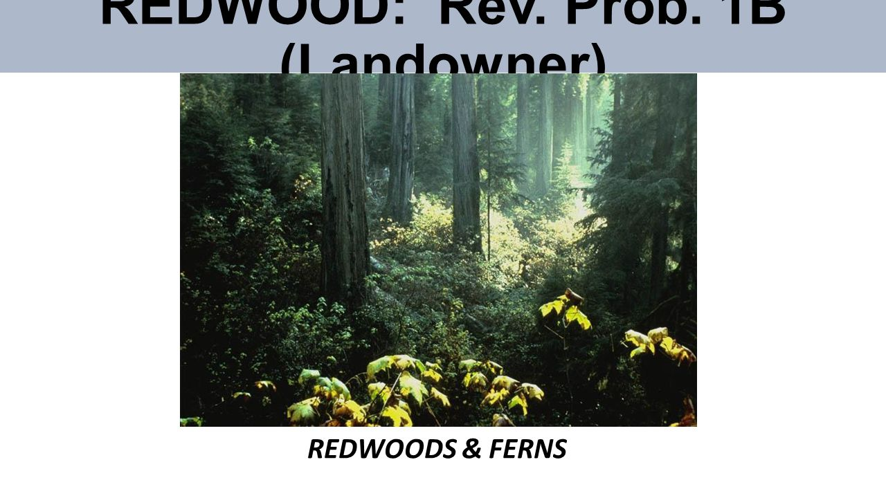 REDWOOD: Rev. Prob. 1B (Landowner) REDWOODS & FERNS