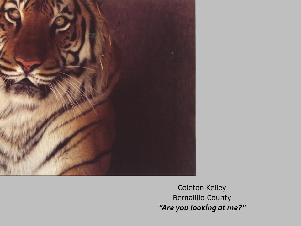 "Coleton Kelley Bernalillo County ""Are you looking at me? """