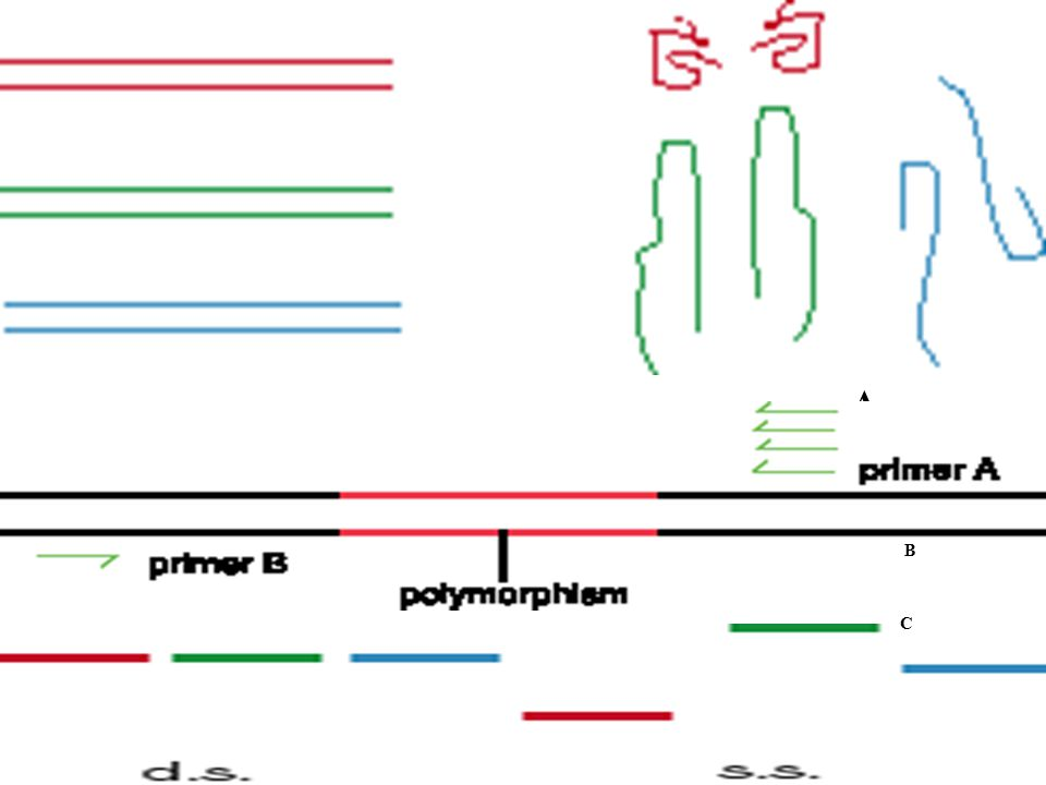 Protein Truncation Test Nonsense or frameshift mutations cause premature truncation of proteins.