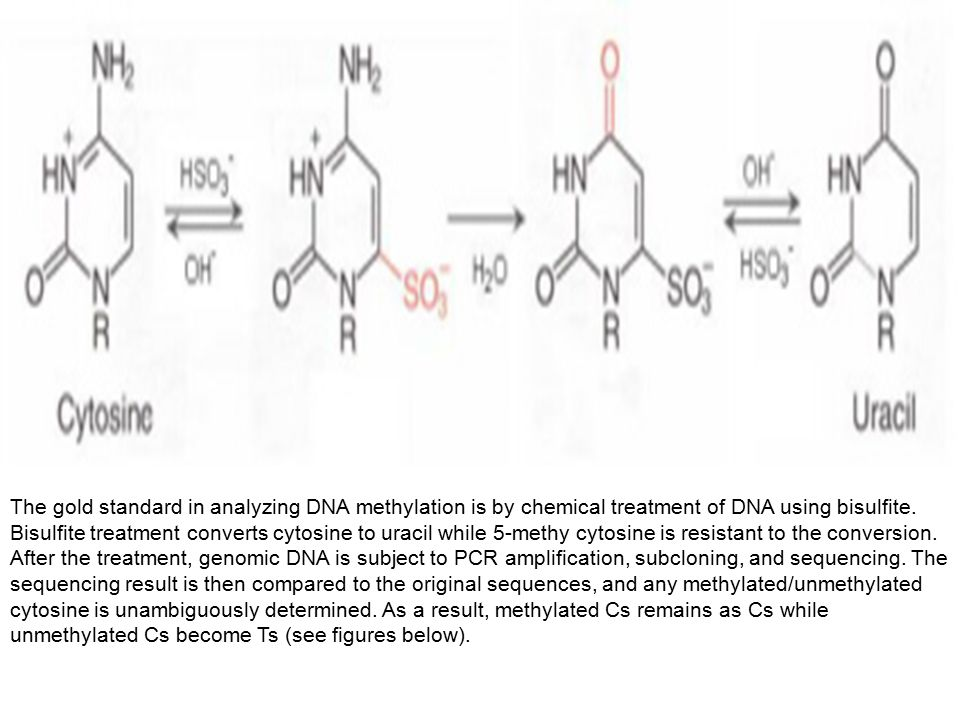 The gold standard in analyzing DNA methylation is by chemical treatment of DNA using bisulfite. Bisulfite treatment converts cytosine to uracil while