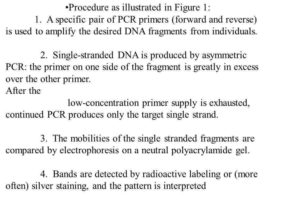 The most common way to detect microsatellites is to design PCR primers that are unique to one locus in the genome and that base pair on either side of the repeated portion (figure 1).