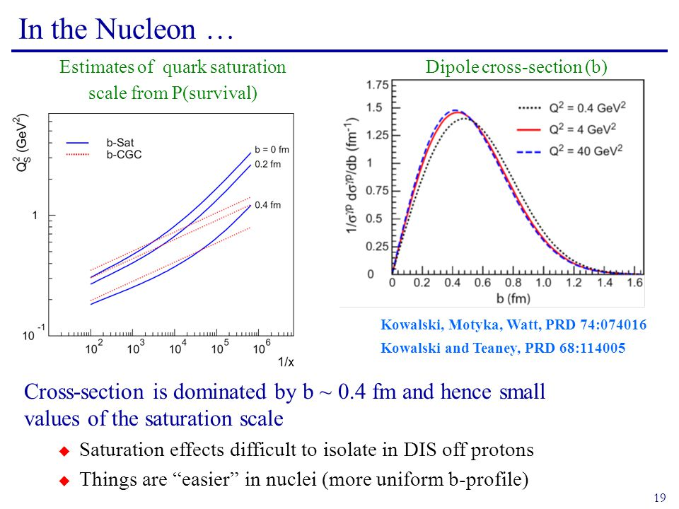 19 In the Nucleon … Dipole cross-section (b) Cross-section is dominated by b ~ 0.4 fm and hence small values of the saturation scale  Saturation effects difficult to isolate in DIS off protons  Things are easier in nuclei (more uniform b-profile) Kowalski, Motyka, Watt, PRD 74:074016 Kowalski and Teaney, PRD 68:114005 Estimates of quark saturation scale from P(survival)