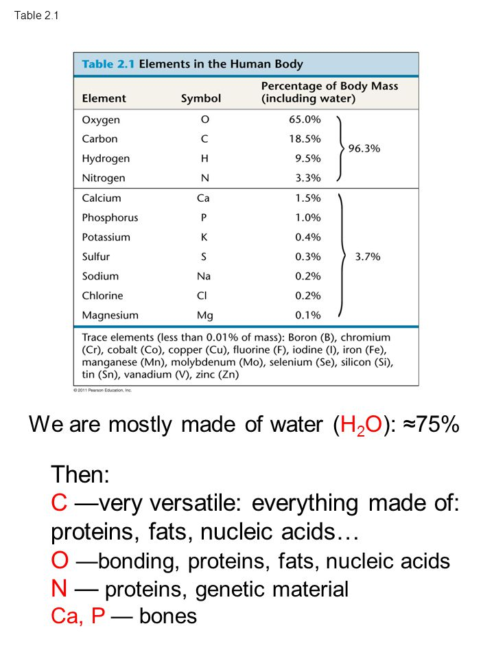 Table 2.1 We are mostly made of water (H 2 O): ≈75% Then: C —very versatile: everything made of: proteins, fats, nucleic acids… O —bonding, proteins, fats, nucleic acids N — proteins, genetic material Ca, P — bones