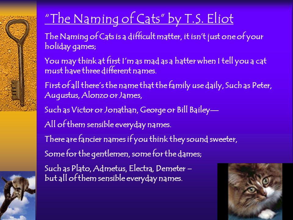 The Naming of Cats by T.S.