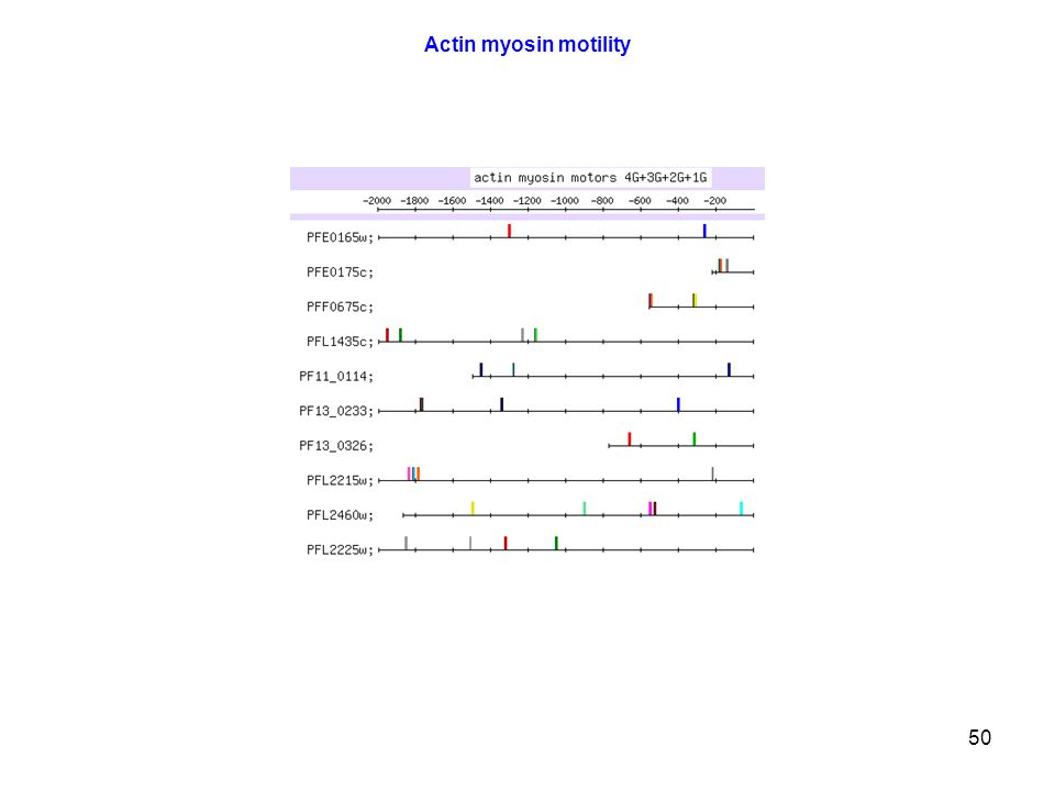 50 Actin myosin motility