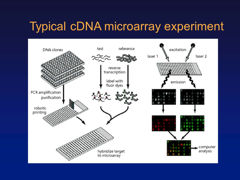 Typical cDNA microarray experiment