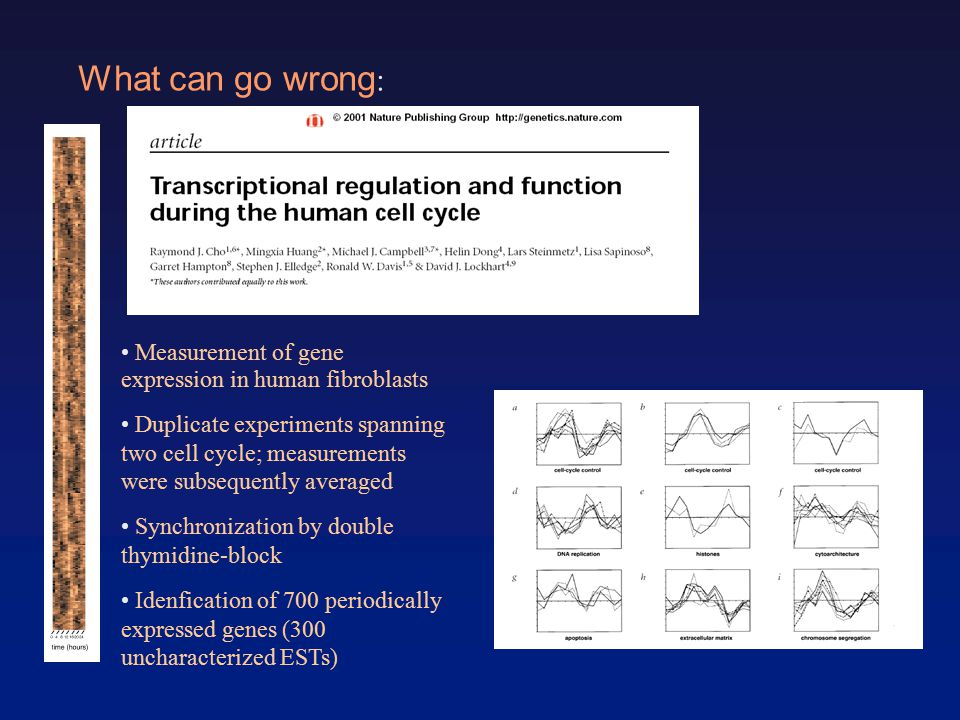 What can go wrong : Measurement of gene expression in human fibroblasts Duplicate experiments spanning two cell cycle; measurements were subsequently averaged Synchronization by double thymidine-block Idenfication of 700 periodically expressed genes (300 uncharacterized ESTs)