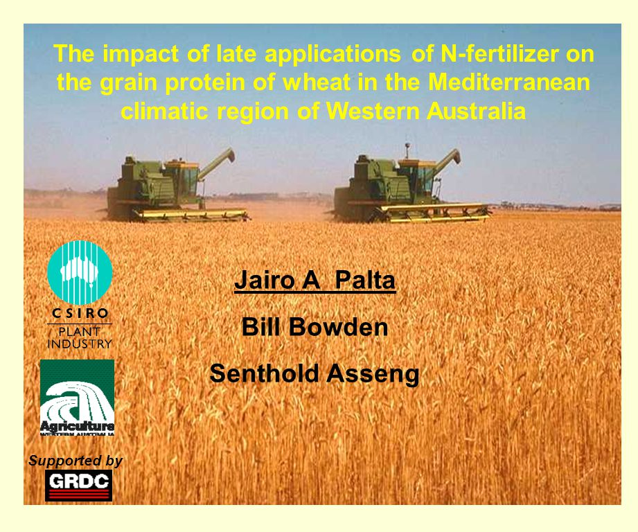 The impact of late applications of N-fertilizer on the grain protein of wheat in the Mediterranean climatic region of Western Australia Jairo A Palta Bill Bowden Senthold Asseng Supported by