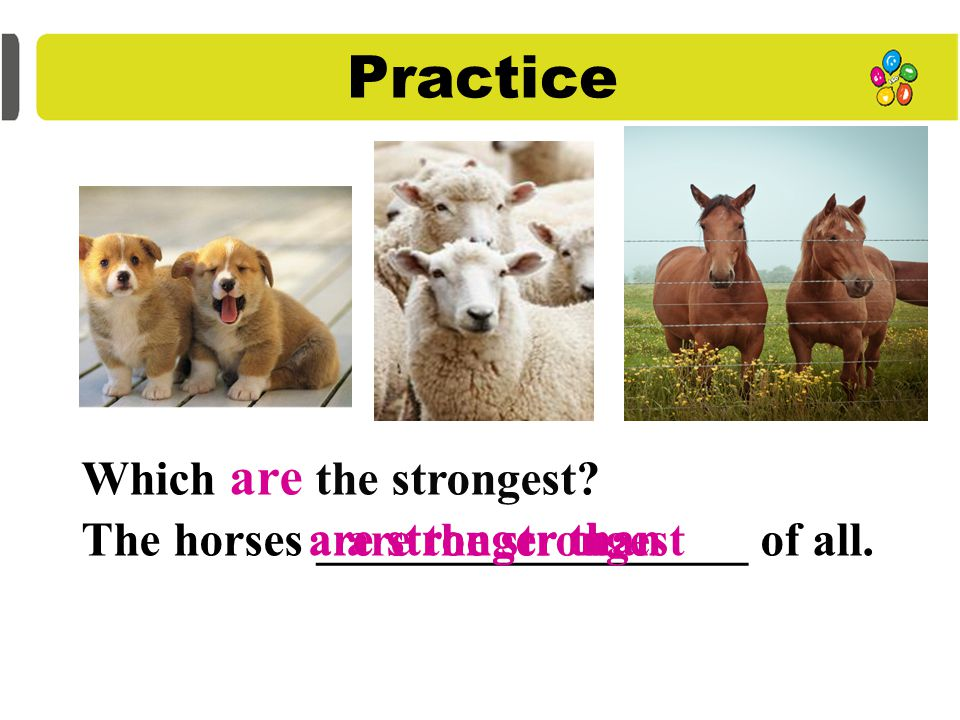 Practice Which is stronger? The sheep ______________ the dog. The horse______________ the sheep. Which is the strongest? is stronger than The horse is