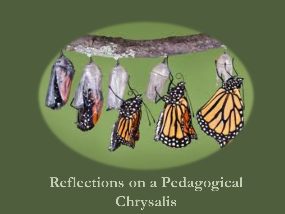 Reflections on a Pedagogical Chrysalis
