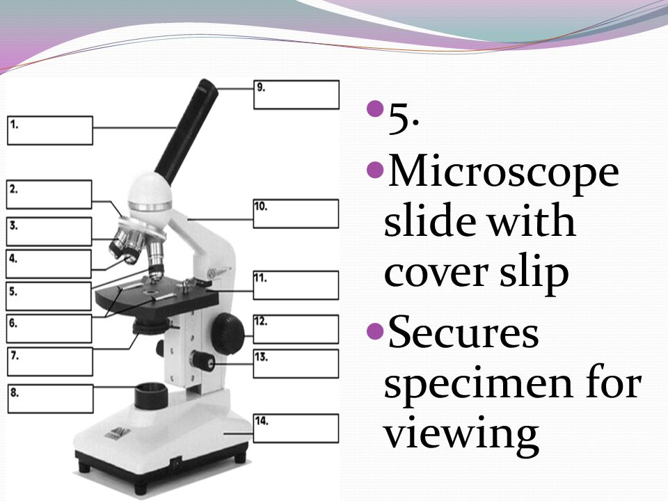 5. Microscope slide with cover slip Secures specimen for viewing