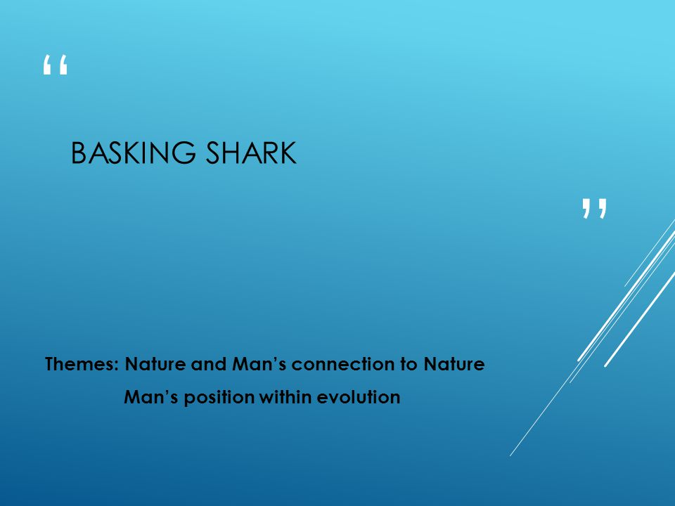 BASKING SHARK Themes: Nature and Man's connection to Nature Man's position within evolution