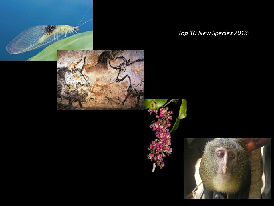 Top 10 New Species 2013