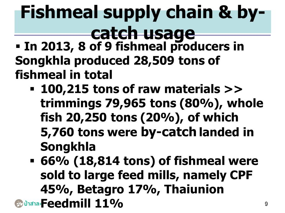 9 Fishmeal supply chain & by- catch usage  In 2013, 8 of 9 fishmeal producers in Songkhla produced 28,509 tons of fishmeal in total  100,215 tons of raw materials >> trimmings 79,965 tons (80%), whole fish 20,250 tons (20%), of which 5,760 tons were by-catch landed in Songkhla  66% (18,814 tons) of fishmeal were sold to large feed mills, namely CPF 45%, Betagro 17%, Thaiunion Feedmill 11%  1,527 tons of fishmeal produced from by- catch were sold to  CPF 575 tons or 37.6% (300 tons of which were traceable)  Farms 300 tons or 19.7% (all were traceable)  Brokers 652 tons or 42.7% (all were traceable)