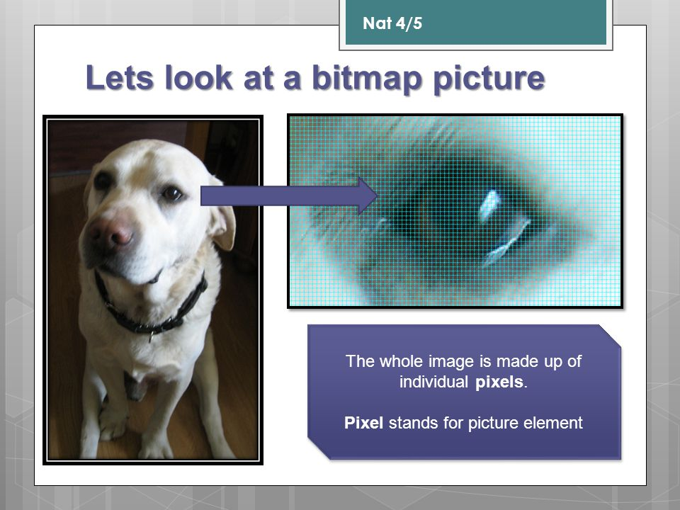 Lets look at a bitmap picture Nat 4/5 The whole image is made up of individual pixels. Pixel stands for picture element The whole image is made up of