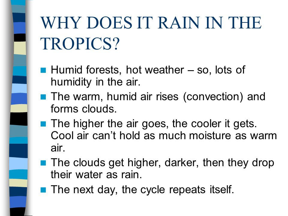 WHY DOES IT RAIN IN THE TROPICS. Humid forests, hot weather – so, lots of humidity in the air.