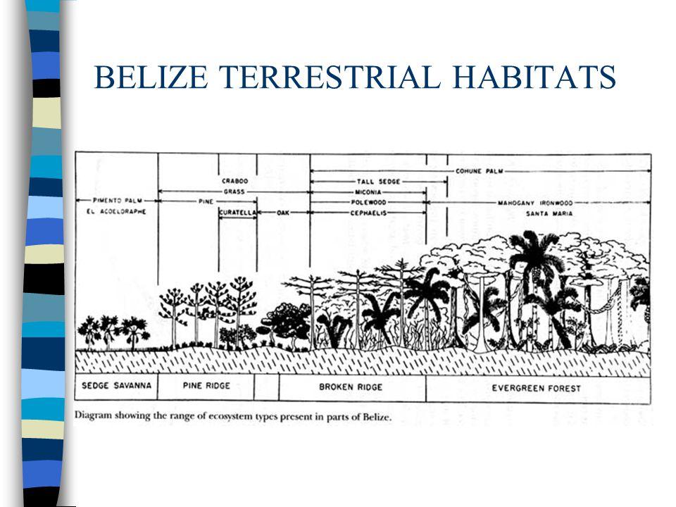 BELIZE TERRESTRIAL HABITATS
