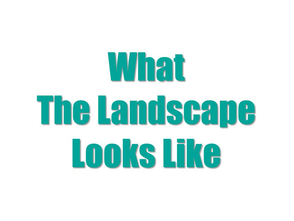 What The Landscape Looks Like