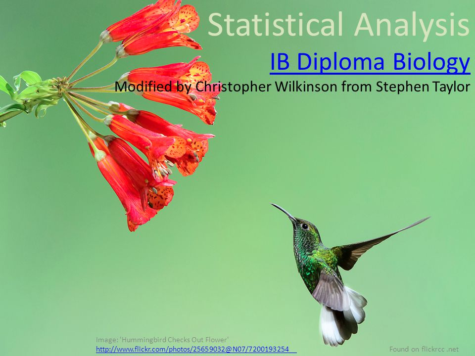 Statistical Analysis IB Diploma Biology Modified by Christopher Wilkinson from Stephen Taylor Image: Hummingbird Checks Out Flower http://www.flickr.com/photos/25659032@N07/7200193254 http://www.flickr.com/photos/25659032@N07/7200193254 Found on flickrcc.net