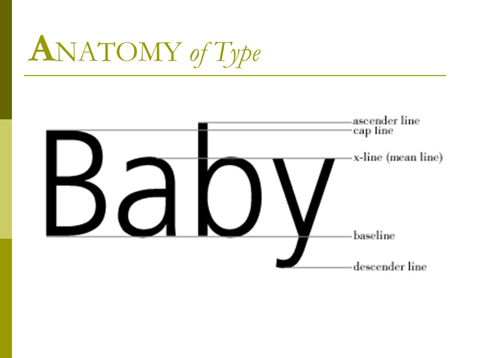 A NATOMY of Type