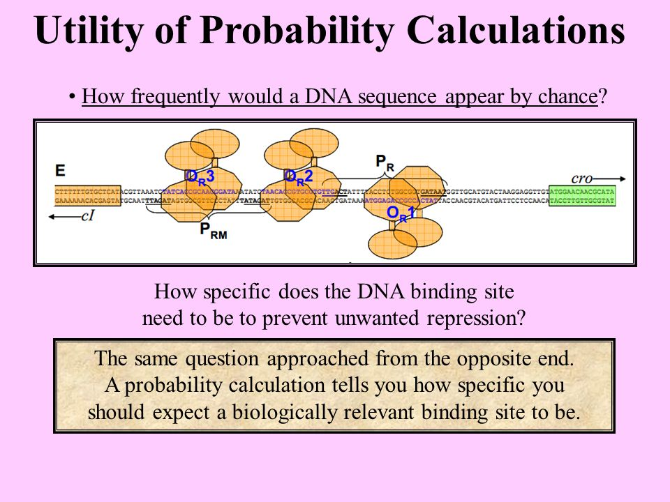 Utility of Probability Calculations How frequently would a DNA sequence appear by chance.
