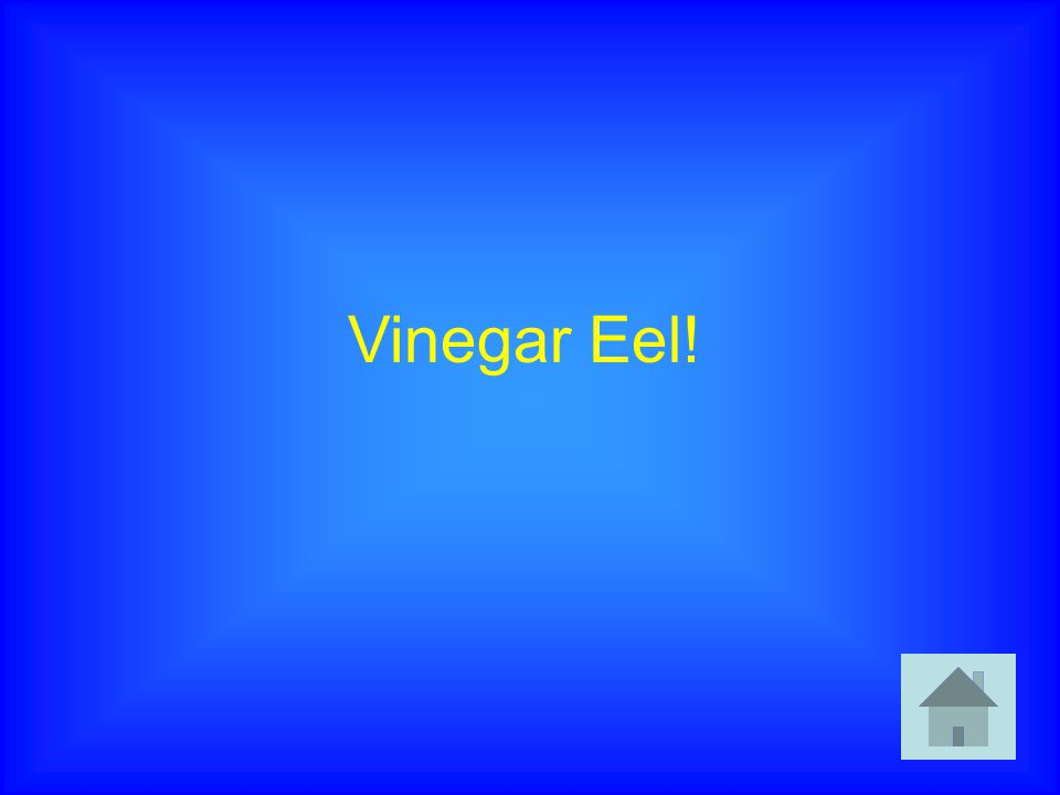 Vinegar Eel!