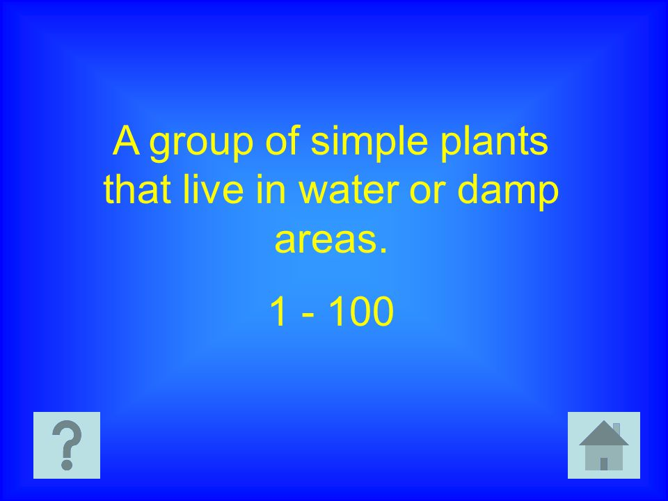 A group of simple plants that live in water or damp areas. 1 - 100