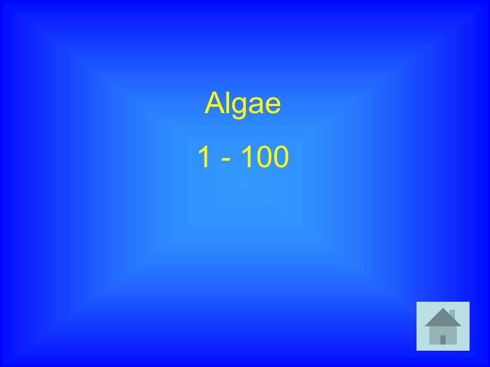 Algae 1 - 100