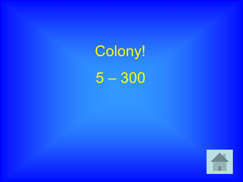 Colony! 5 – 300