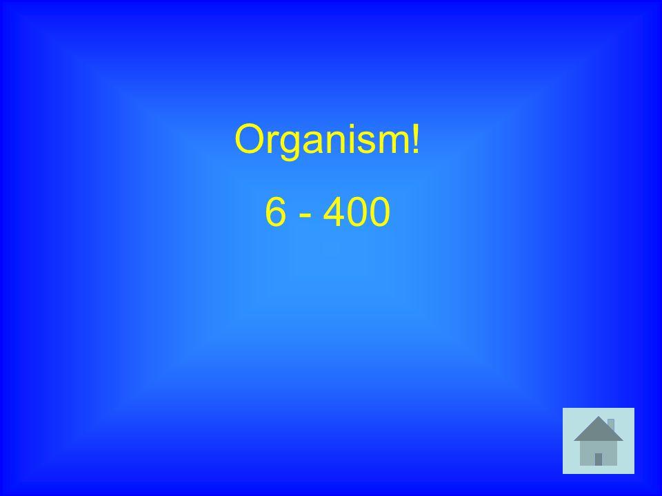 Organism! 6 - 400