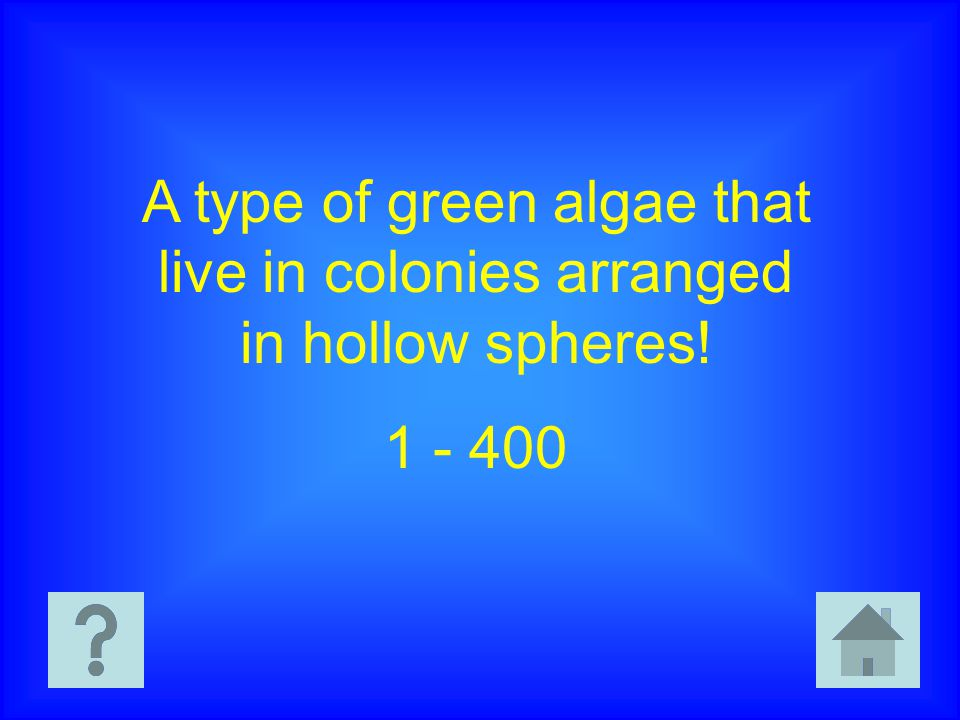 A type of green algae that live in colonies arranged in hollow spheres! 1 - 400