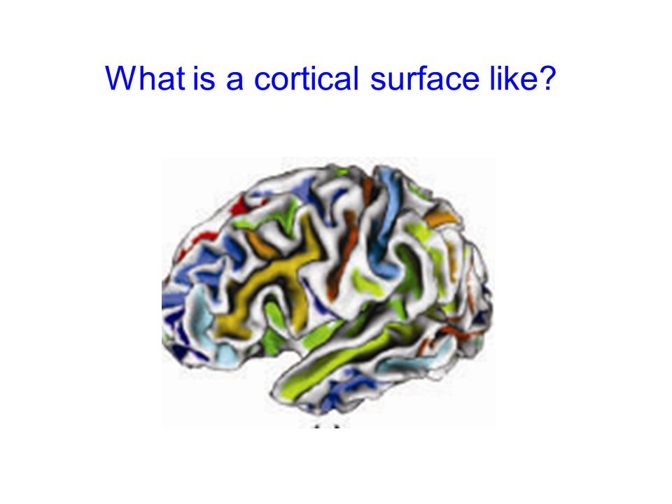 What is a cortical surface like