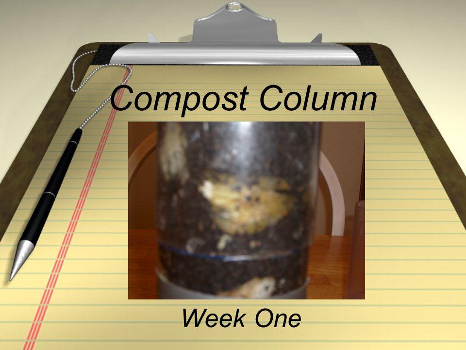 Compost Column Week One
