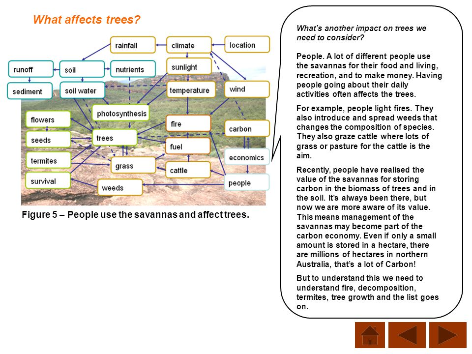 Figure 5 – People use the savannas and affect trees. What affects trees? What's another impact on trees we need to consider? People. A lot of differen