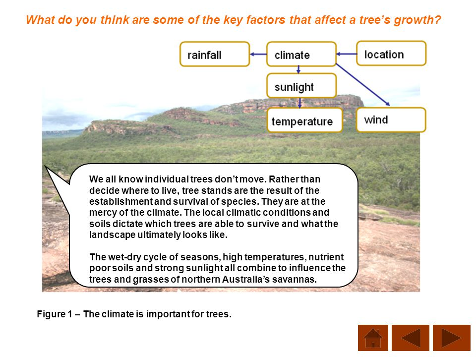 What do you think are some of the key factors that affect a tree's growth? Figure 1 – The climate is important for trees. We all know individual trees