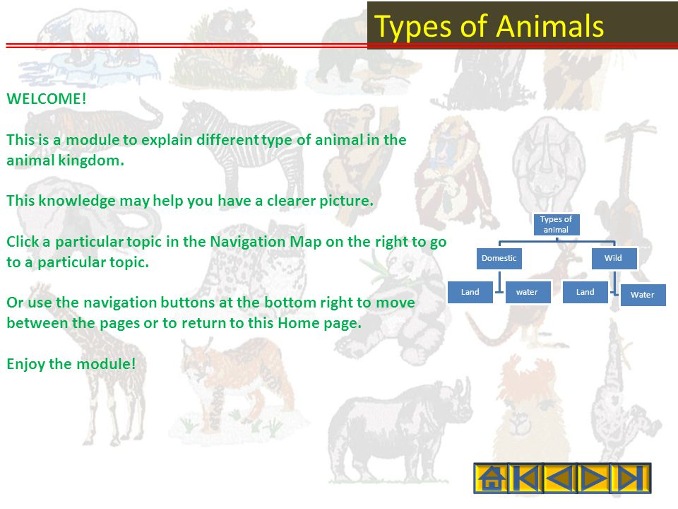 Types of Animals WELCOME.