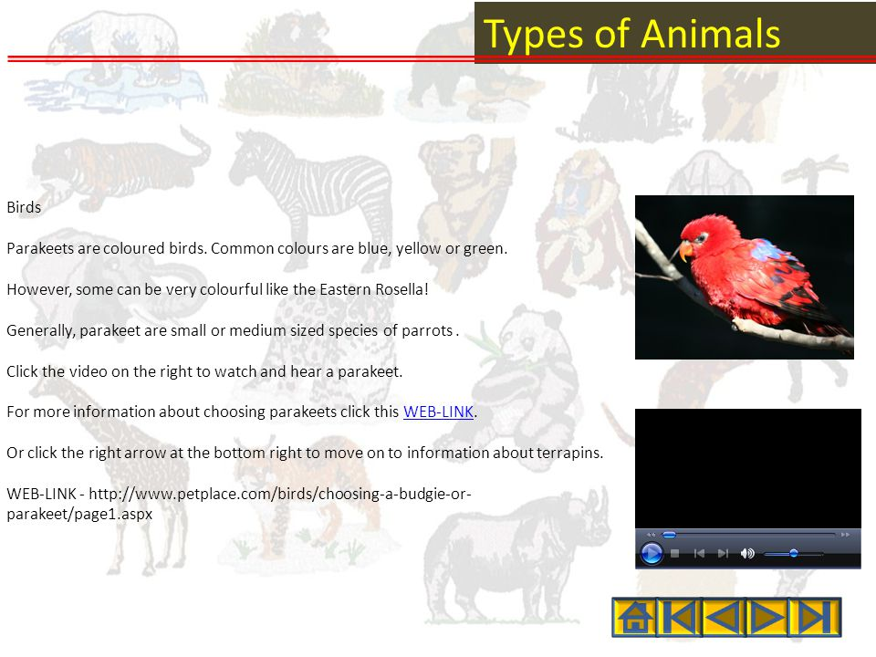 Types of Animals Birds Parakeets are coloured birds.