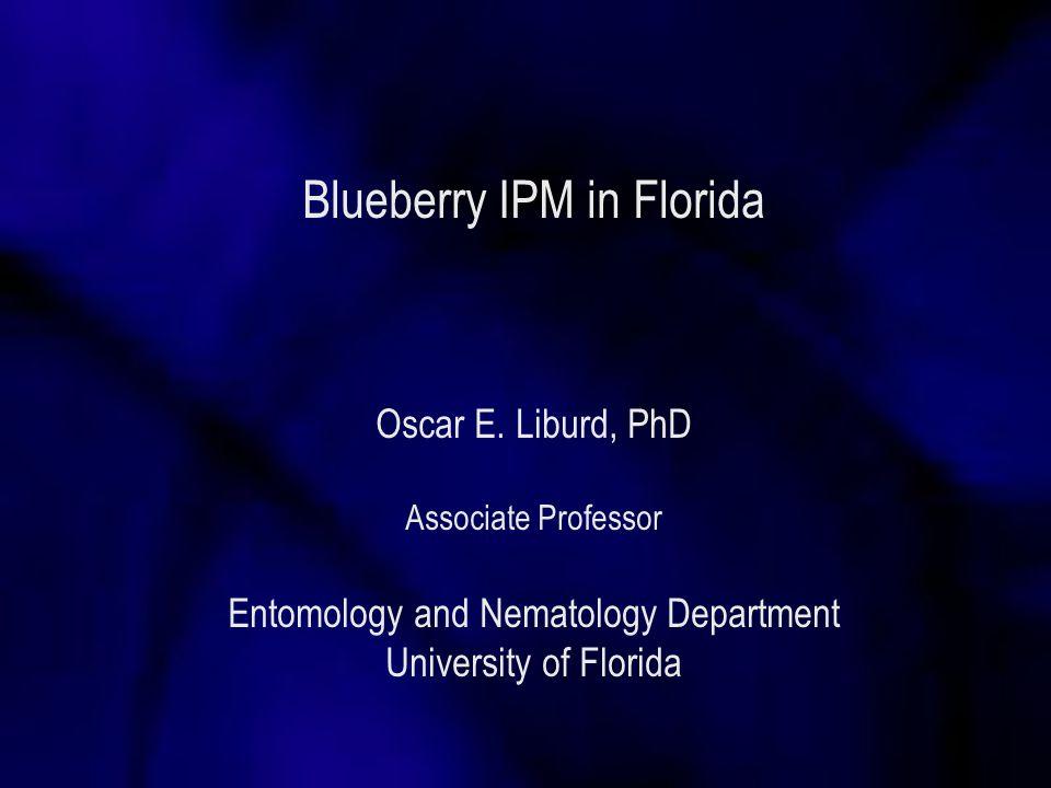 Flea beetles in Blueberry Colaspis pseudofavosa Damage Blueberry leaf beetle
