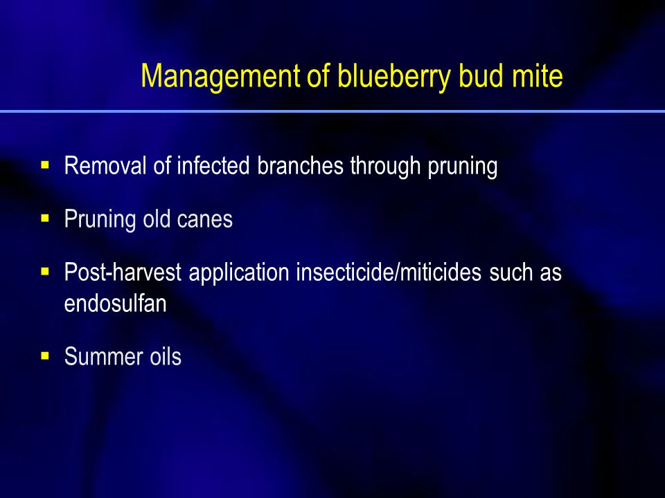 Management of blueberry bud mite  Removal of infected branches through pruning  Pruning old canes  Post-harvest application insecticide/miticides s