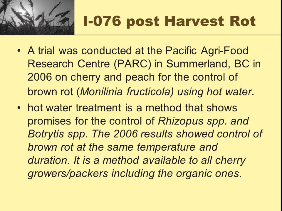 I-076 post Harvest Rot A trial was conducted at the Pacific Agri-Food Research Centre (PARC) in Summerland, BC in 2006 on cherry and peach for the control of brown rot (Monilinia fructicola) using hot water.