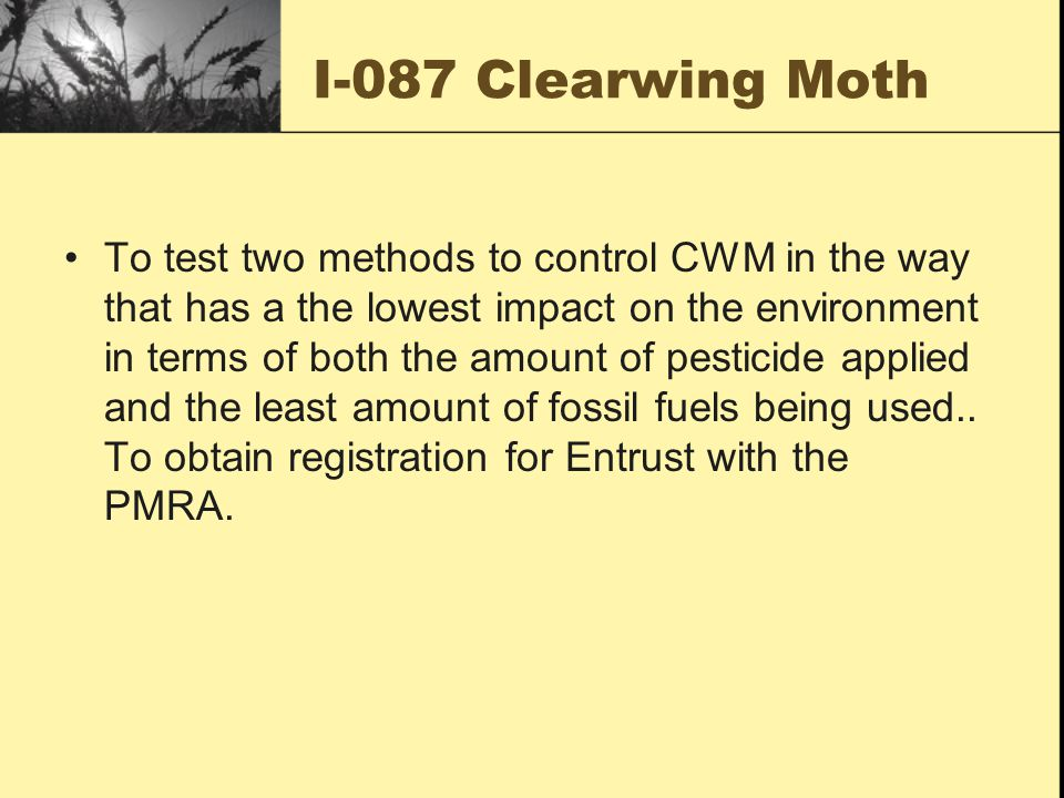 I-087 Clearwing Moth To test two methods to control CWM in the way that has a the lowest impact on the environment in terms of both the amount of pesticide applied and the least amount of fossil fuels being used..