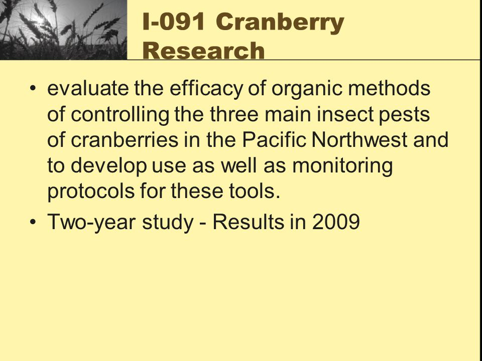 I-091 Cranberry Research evaluate the efficacy of organic methods of controlling the three main insect pests of cranberries in the Pacific Northwest and to develop use as well as monitoring protocols for these tools.