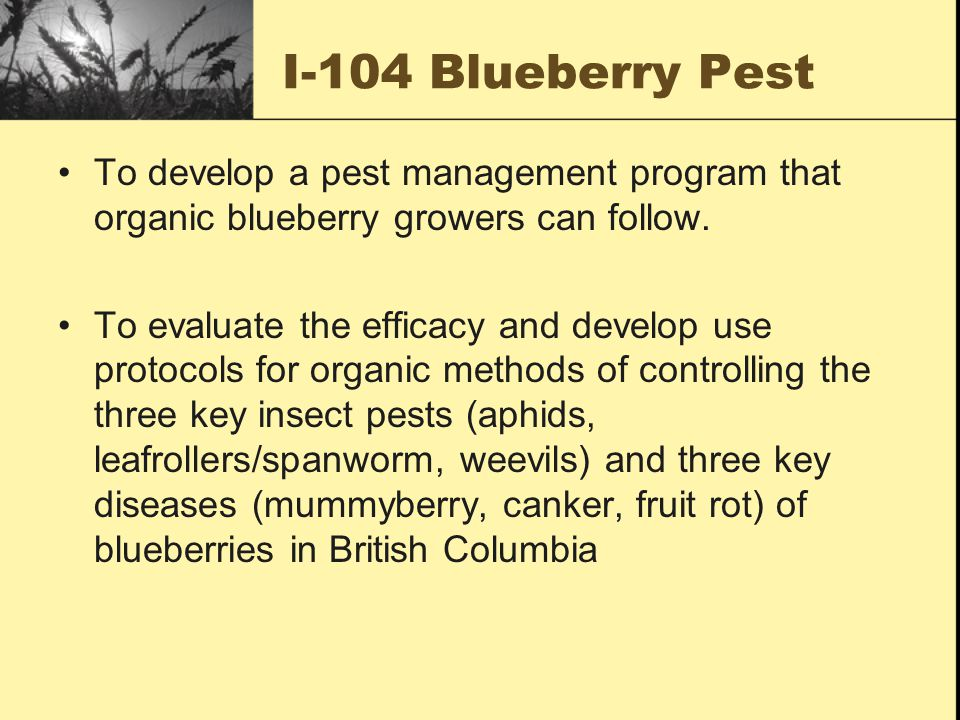 I-104 Blueberry Pest To develop a pest management program that organic blueberry growers can follow.
