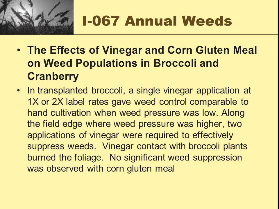 I-082 Bindweed Mites Trial the use of European Gall Mite (Aceria malherbae) to control field bindweed.