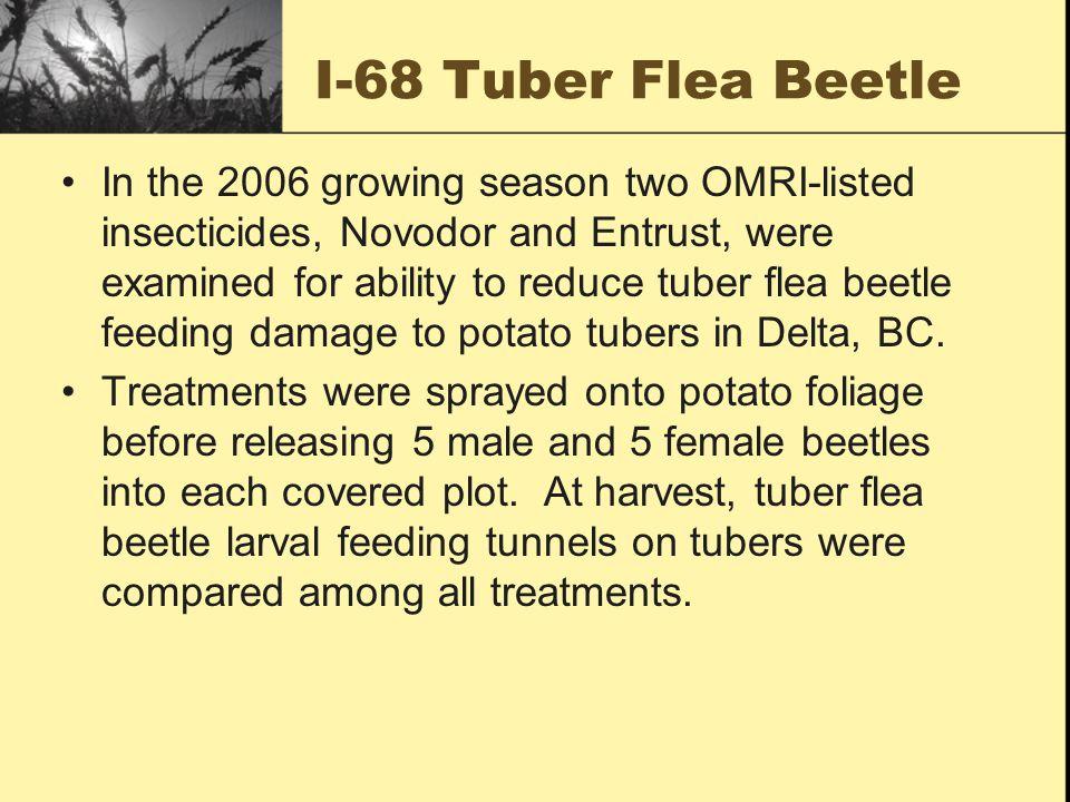 I-068 Tuber Flea beetle contd.