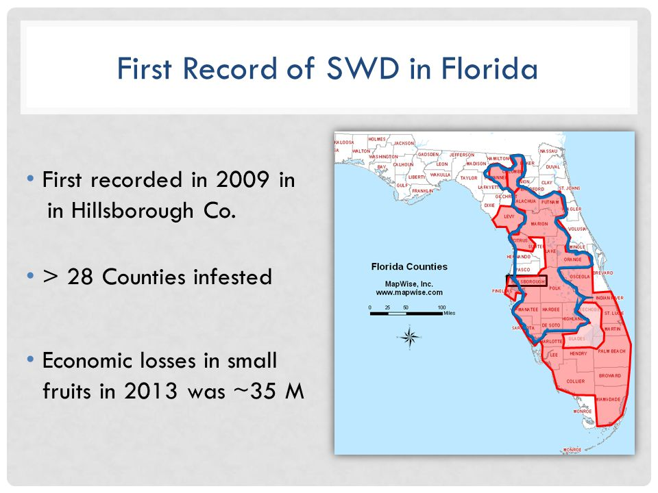 First Record of SWD in Florida First recorded in 2009 in in Hillsborough Co.