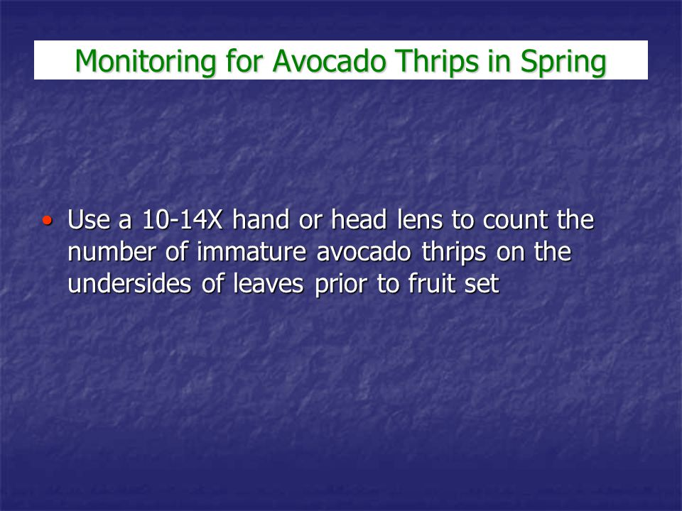 Monitoring for Avocado Thrips in Spring Use a 10-14X hand or head lens to count the number of immature avocado thrips on the undersides of leaves prio