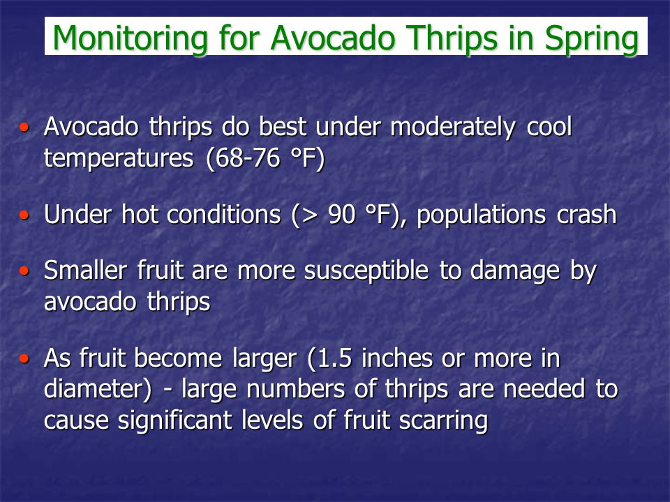 Avocado thrips do best under moderately cool temperatures (68-76 °F)Avocado thrips do best under moderately cool temperatures (68-76 °F) Under hot con