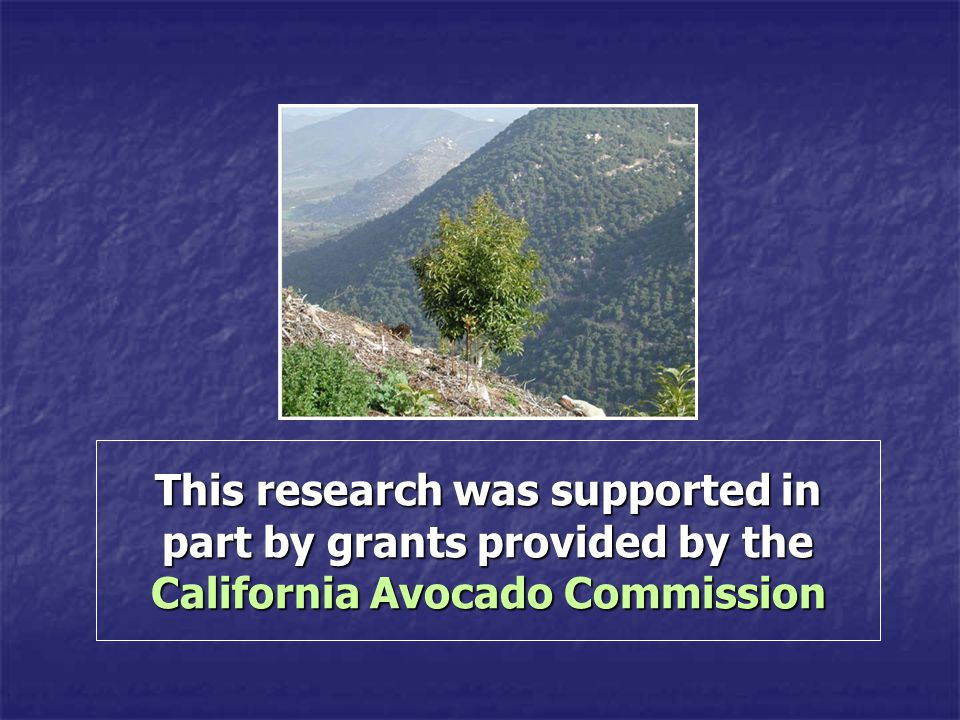 This research was supported in part by grants provided by the California Avocado Commission